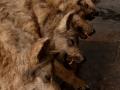 la-jeune-fille-et-les-loups-series-de-faux-loups