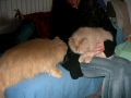 frickies-rencontre-vrai-et-faux-chat