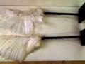 le-gaulois-paire-d-ailes-mecaniques