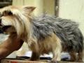 viking-faux-chien